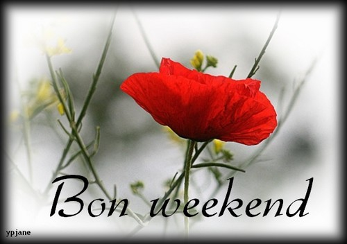 Bon Samedi Adc43921